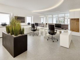 Pflanzen Dekoration im Büro