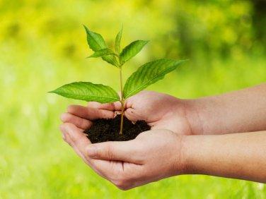 Hand die Pflanze hält