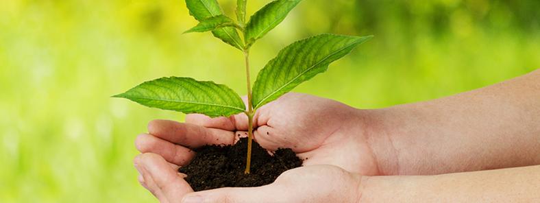 Grasenhiller und Kyocera setzen sich für die Umwelt ein